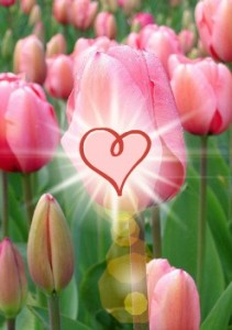 tulip-with-heart-burst