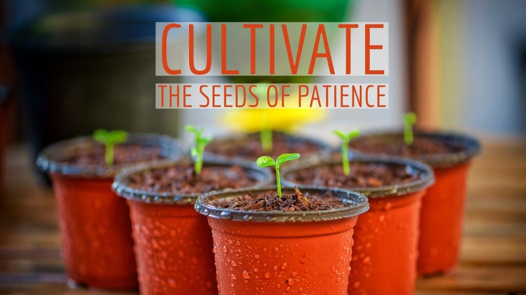 Seeds of Patience